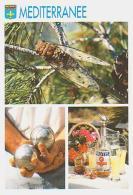 INSECTE        H5        3 Vues ( Cigale, Pétanque , Pastis ) - Insectes