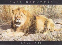 LION        H5         Kalahari ( Lion ) ( Carl Brendens ) - Lions