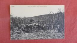 Jamaica  Taking Off The Crop Sugar Estate    Ref 2310 - Jamaïque