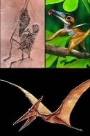 FOSSILE :   MOULAGE   D'un   Ptérosaure Arboricole    **Némicoloptérus Cripticus** - Fossiles