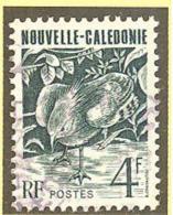 Nouvelle Caledonie:Yvert  N° 605°; Cagou - Neukaledonien