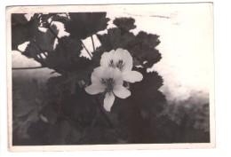 Q2867 Vera Fotografia Vintage Con FIORI FLEURS FLOWERS SU CARTOLINA - APPUNTI DI VOTI SCOLASTICI SUL RETRO - Altri