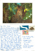 Leopard, South Africa Postcard Posted 2003 Stamp - South Africa