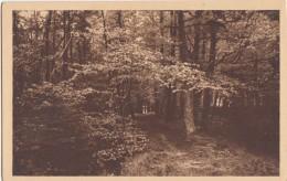 France, Abbaye De La GRAND TRAPPE, Le Sentier Derriere La Grotte Saint-Bernard, Unused Postcard [18403] - France