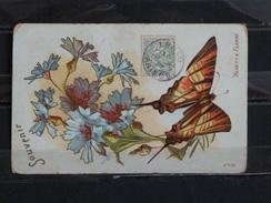 F03 - Papillon Flambé Et Bleuets - 1907 - Papillons