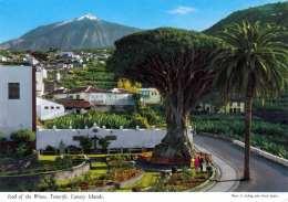 TENERIFE (Canary Island) - Icod Of The Wines, Drachenbaum - Tenerife