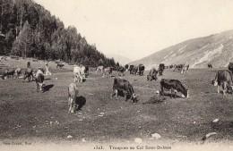 65Bcl  06 Troupeau De Vaches Au Col St Dalmas En TTBE Cachet Valdeblore Au Verso - France