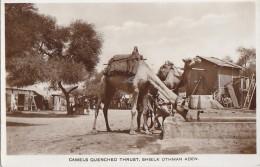 Asie - Yemen - Shaykh Uthman Aden - Camels Chameaux Abreuvoir - 1934 - Yémen