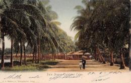 "06150 ""PANAMA - PALM AVENUE CRISTOBAL COLON"" ANIMATA. CART. ILL. ORIG. SPEDITA 1905 - Panama"