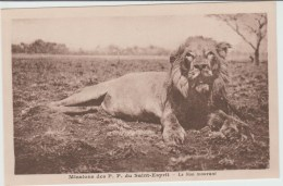 MISSIONS DES P.P DU SAINT ESPRIT - LE LION MOURANT - Missions
