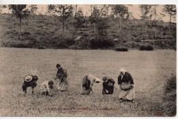 CPA.Metiers.Paysans.1916.Le Glanage.Animée Paysannes Aux Champs En Tenue Typique. - Paysans