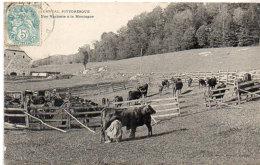 Cantal Pittoresque - Une Vacherie A La Montagne     (88893) - Non Classificati