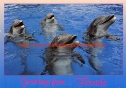 Dolphins Florida - Etats-Unis