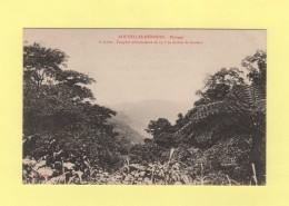 Nouvelles Hebrides - Paysage - Fougere Arborescente - Vanuatu