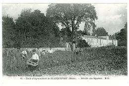 33 - T50025CPA - BLANQUEFORT - Récolte Des Légumes - Parfait état - GIRONDE - Blanquefort