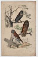 Gravure Edouard Traviés Oiseaux 19ème Le Chat Huant La Chouette L'effraye Imprimerie Laurent Rue St Jacques - Prints & Engravings