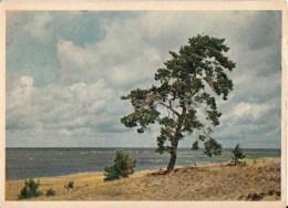 Pärnu Bay Beach - 1955 - Estonia USSR - Unused - Estland
