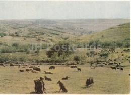 Hills Of Moldova - Sheep - Shepherd - 1966 - Moldova USSR - Unused - Moldavie