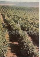 Grape Plantation - 1966 - Moldova USSR - Unused - Moldavie