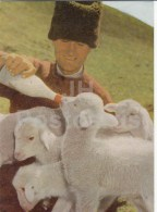 Caring Shepherd - Lamb - 1966 - Moldova USSR - Unused - Moldavie