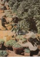 Grape Harvest - 1966 - Moldova USSR - Unused - Moldavie