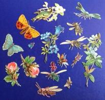 New Prix Fixe Beau Decoupis Chromo Lot Fleurs Insecte Papillon Abeille - Victorian Die-cuts