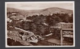 LES CEDRES DU LIBAN VERS 1939. - Liban