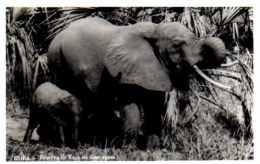 Beira - Reserva De Caça De Gorongosa - éléphant - Mozambique