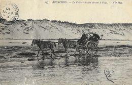 Arcachon - La Voiture à Sable Devant Le Pilat - Attelage - Carte ND Phot. N° 237 - Arcachon