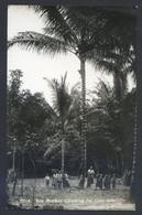 RP. Malaysia *Kra Monkey Climbing For Coco-nuts* Nueva. - Malasia