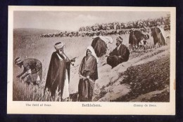 Palestina. Bethléhem *Camp De Boaz* Nueva. - Palestina