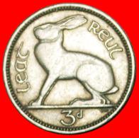 § HARE: IRELAND ★ 3 PENCE 1956! LOW START ★ NO RESERVE! - Irlande