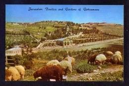 Palestina. Jerusalem *Basilica And Gardens Of Gethsemane...* Nueva. - Palestina