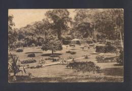 Sri Lanka. Kandy *Peradeniya Gardens* Nueva. - Sri Lanka (Ceilán)