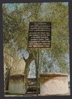 IRAK:LEGENDARY SPOT OF THE GARDEN OF EDEN IN BASRAH. - Iraq