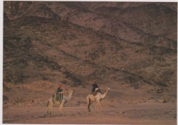 SAUDI ARABIA,ARABIE SAOUDITE,SAUDITA,ARAB EMIRATES,TABUK,TABOUK,CARAVANE - Arabie Saoudite