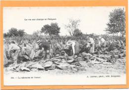 24 La Vie Aux Champs En Périgord - La Récolte Du Tabac - Belle Animation - Sin Clasificación