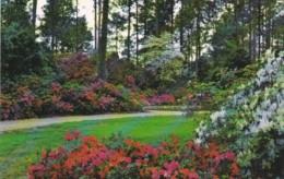 Louisiana Springtime Scene