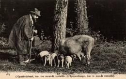 CERDOS / VARKENS / PIGS / PORCS / SCHWEINE - Cerdos
