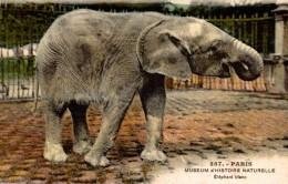 ELEFANTES / OLIFANTEN / ELEPHANTS / ÉLÉPHANTS / ELEFANTEN. - PARIS - Elefantes