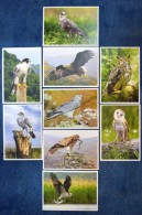 Moldova 2016 Birds Owls Set Of 9 Pre-paid Postcards - Moldavië