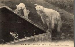 OSOS / BEREN / BEARS / OURS / BÄREN, - PARIS - Osos