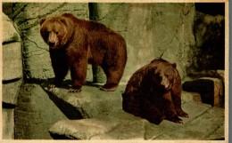 OSOS / BEREN / BEARS / OURS / BÄREN, - ALASKA - Osos