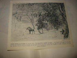 Affiche Saison Sèche Au TCHAD    Afrique équatoriale Française 1951 - Afiches