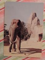 Parc Zoologique De Paris : Eléphant D´Asie (sans Doute Siam) - Années 80 - Olifanten