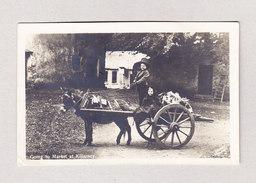 """Irland Killarney Kinder Auf Gespann Mit Esel """"Going To Market"""" Foto Anthony Gesendet Nach Erstfeld CH - Irlande"""
