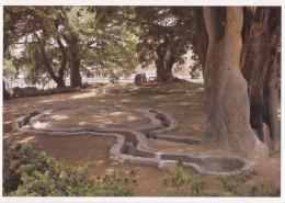 Korea UNESCO WHS - Gyeongju Historic Areas - Posokchong Pool - B - Corée Du Sud