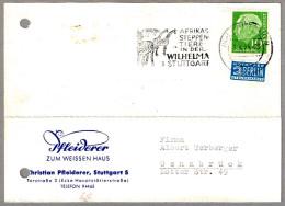 CEBRA Y JIRAFAS - ZEBRAS AND GIRAFFES. Stuttgart 1954
