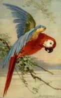 LORO / HUN / THEIR / LEUR / IHRE - Pájaros
