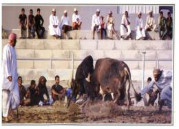 (808) Oman - Cow Fighting - Corrida